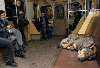 Dog on metro