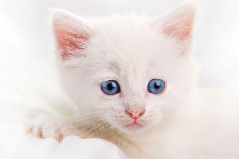 White-kitten1